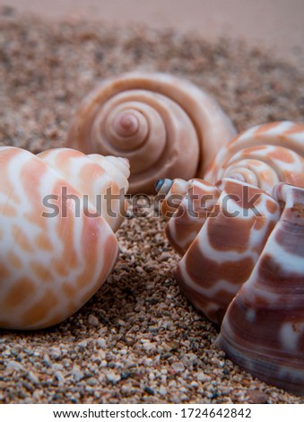 A picture of some alphabet shells. Alphabet shells are one of seashell category.