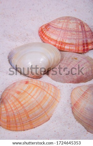 A picture of a few clam shells with different colors. White, orange and red seashells.
