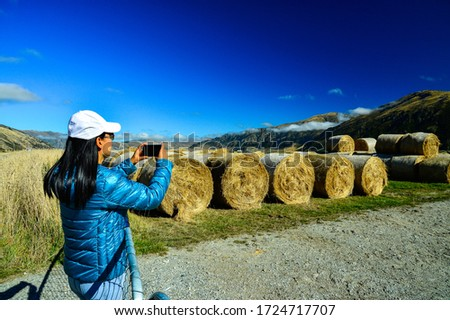 Asian traveler woman in blue jacket using smartphone takes picture of dried hay bale field farm after harvest left on the grass with clear blue sky  of South Island, New Zealand.