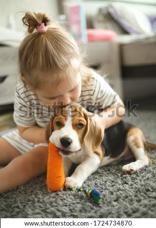 little girl hugs a cute beagle puppy. #1724734870