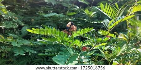 Selective focus on asian gaint hornet , Asian giant hornet setting on the flower