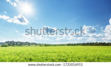 field of spring grass and perfect sky Royalty-Free Stock Photo #1725016915