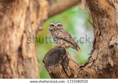 Owl bird standing on tree trunk #1725080920