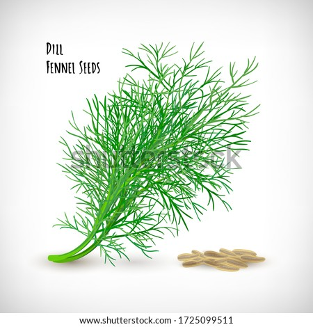 Vector illustration. Image of fresh dill spice plant with seeds. Isolated dill twig, fennel seeds on vignette background. Lettering Dill Fennel Seeds. Herb and spice vector elements for web design. Royalty-Free Stock Photo #1725099511