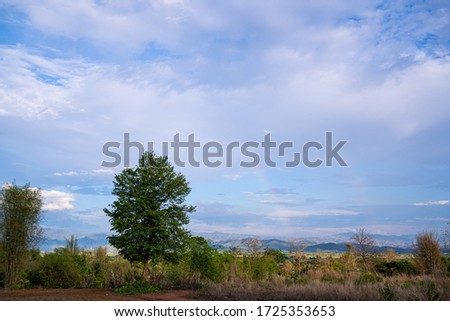 The rainbow occurs in high mountain valleys after rain. And a white cloud covered the picture from the hills near the big tree