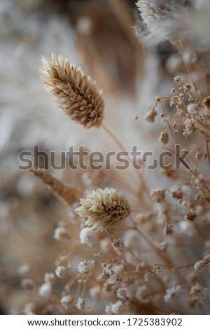 The Beauty of Dried Flowers  Royalty-Free Stock Photo #1725383902