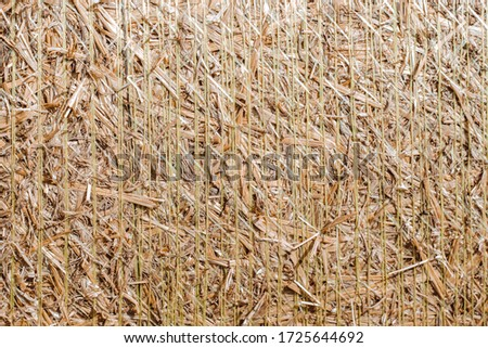 Bales of straw are illuminated by the sun. Macro photo nature dry hay. Texture background dry Wheat Straw. #1725644692