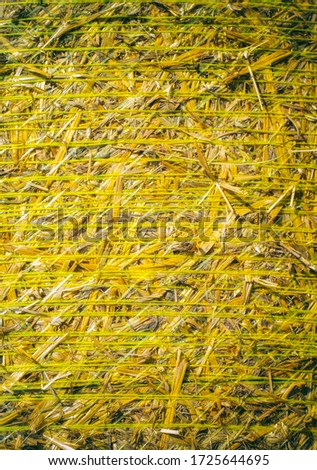 Bales of straw are illuminated by the sun. Macro photo nature dry hay. Texture background dry Wheat Straw. #1725644695