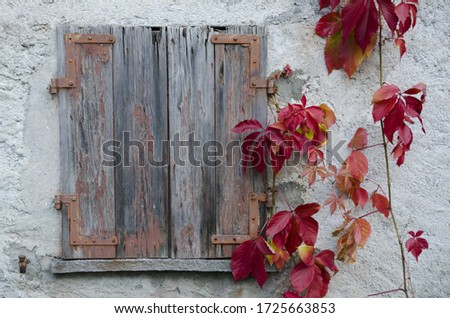A beautiful picture of a vintage wooden window next to red Poinsettia