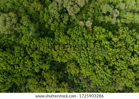 4K aerial drone shoot. Flying over a beautiful green forest in a rural landscape. Top view of trees in forest background. Empty field. Drone photography. Forest river, rural road.  #1725903286