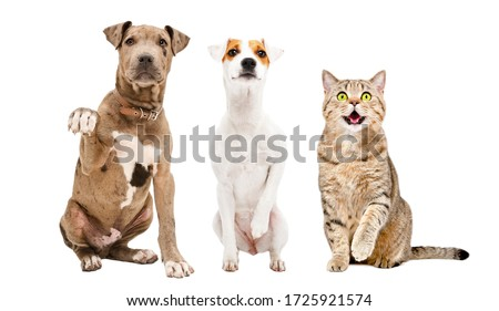 Two dogs and a cat sitting together with paws raised up isolated on a white background Royalty-Free Stock Photo #1725921574