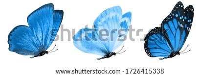 blue tropical butterflies isolated on a white background. moths for design #1726415338