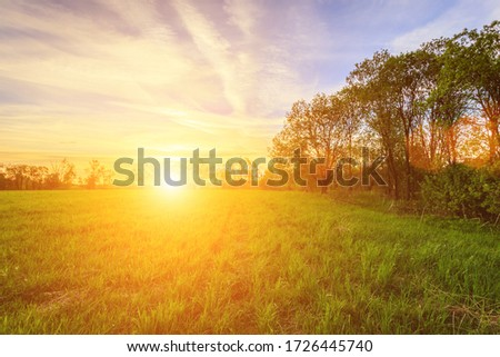 Scene of beautiful sunset or sunrise in a summer field with willow trees and grass. Landscape. Royalty-Free Stock Photo #1726445740