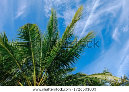 Coconut trees with clouds and blue sky background. Royalty high-quality free stock image of plants. Photography landscape.