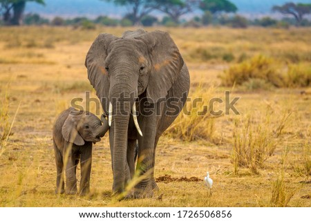 Elephant and her baby walking through Amboseli National Park Royalty-Free Stock Photo #1726506856