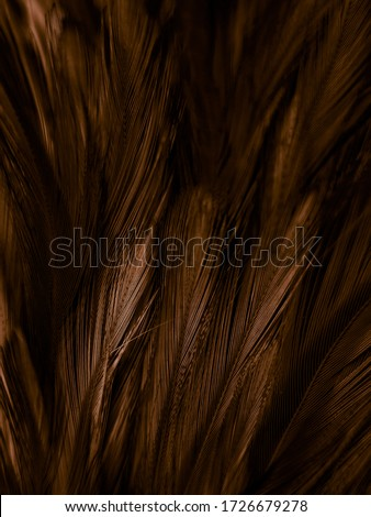 Beautiful abstract white and brown feathers on white background and soft yellow feather texture on white pattern and yellow background, feather background, gold feathers banners #1726679278
