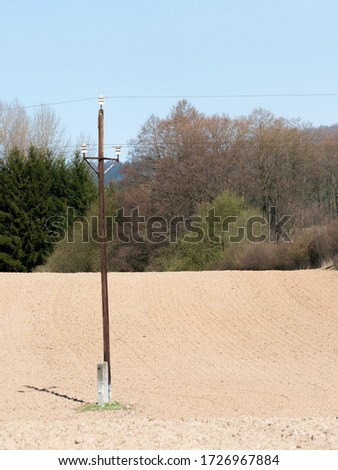 Early spring rural landscape, wooden electric pole in young wheat field and blue sky #1726967884