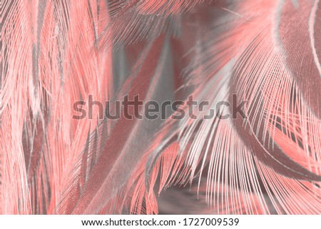 Beautiful  pink feather pattern texture background