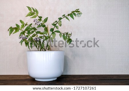 Home decoration. Green home plant on white background. Home garden. Flower care. Stylish home decor. Living room interior #1727107261