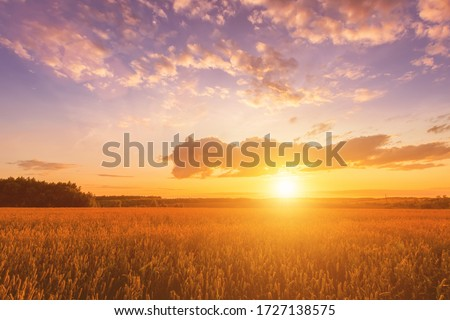 Scene of sunset on the field with young rye or wheat in the summer with a cloudy sky background. Landscape. #1727138575