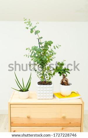 Home plant. Life style. Minimalism.  #1727228746
