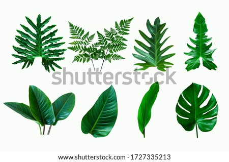 set of green monstera palm and tropical plant leaf isolated on white background for design elements, Flat lay Royalty-Free Stock Photo #1727335213