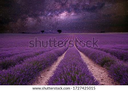 Amazing nature landscape. Stunning night landscape, milky way sky with lines of blooming lavender meadow. Spring summer scenery, artistic landscape and skyscape view. Inspirational nature landscape