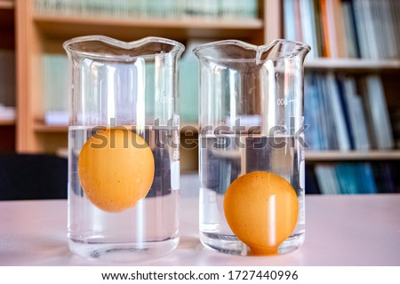 Beaker with pure water and egg sank inside and beaker with salt water and egg floating inside Royalty-Free Stock Photo #1727440996