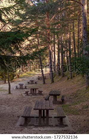 Picnic area in the forest with tables and benches. Picture during the sunset in Spain.