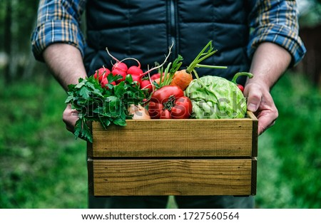 Wooden box with fresh farm vegetables in man's hands outdoors. Royalty-Free Stock Photo #1727560564