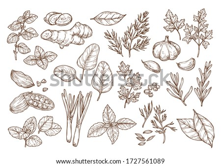 Sketch illustration of spices and herbs. Hand drawing. To create ads, prints, menus, packaging. #1727561089