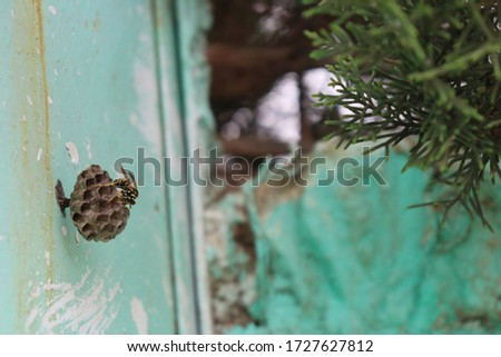 2020 - 12-12 Morocco A picture of the hornet's nest on an iron door