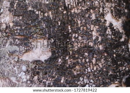 dry tree bark texture background #1727819422