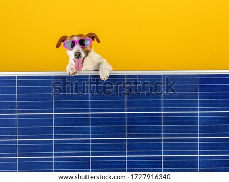 Green Energy. A funny dog in sunglasses peeps out from behind the solar panel. Green technology and friendly for enviroment