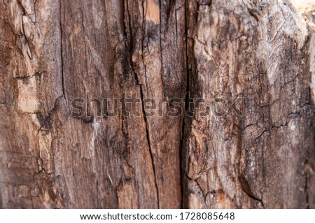 Decorative texture of pine bark and wood chips. The natural material of the wood pieces of tree bark. Completely filled the image frame. Old tree bark texture, close up. Wood bark background. Nature #1728085648