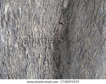 Beautiful tree stock footage, Hd stock footage, Tree