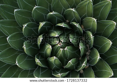 Fractal cactus energy peaceful green Royalty-Free Stock Photo #1728137332