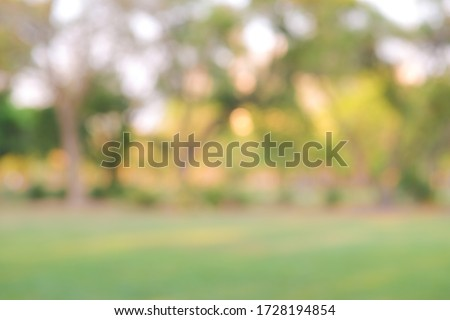 Abstract blurred green tree city park sunset light nature background