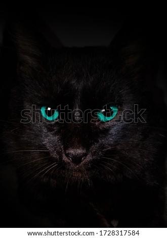 blue eyes black cat dark