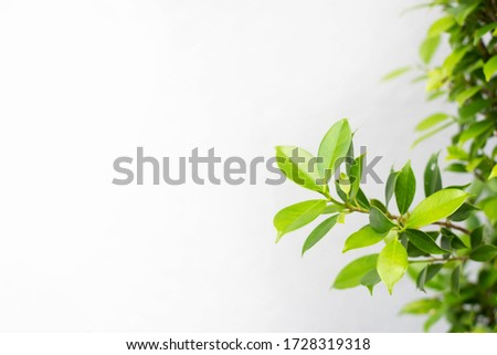 Close up green leaf nature view and blurred greenery background in garden with copy space for your design. #1728319318
