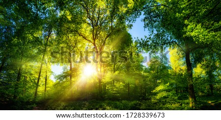 Vivid scenery of beautiful sunlight in a lush green forest, with vibrant colors and pleasant contrast #1728339673
