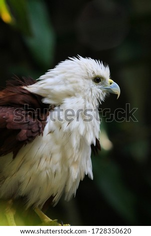 Portrait of beautiful Eagle bird spreading his feather while stand on the branch with blur background. White head and yellow beak on it. #1728350620