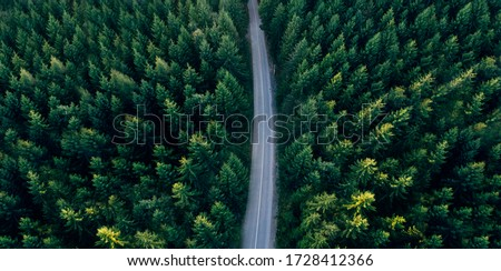 Top view of dark green forest landscape wallpaper art. Aerial nature scene of pine trees and asphalt road banner design. Countryside path trough coniferous wood form above. Adventure travel background Royalty-Free Stock Photo #1728412366