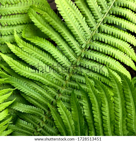 macro Photo of green fern petals.   #1728513451