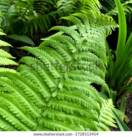 macro Photo of green fern petals.  The green  plant fern blossomed. Stock photo nature Fern  background green plant. #1728513454