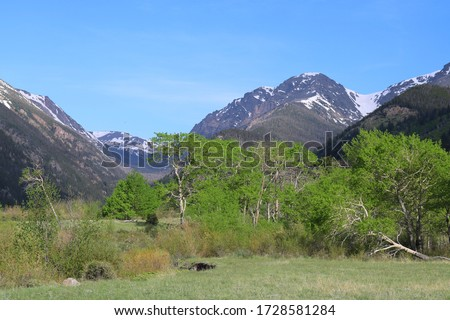 The Fall River flows through Endo Valley in Colorado's Rocky Mountain National Park. Green trees in springtime and mountain views.  Snow capped mountain in background #1728581284
