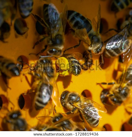 Collector of pollen on a hive. Bees with collected pollen enter the openings of Apiary pollen collector mounted on the hive. Pollen trap. harvesting in the apiary.  #1728819436