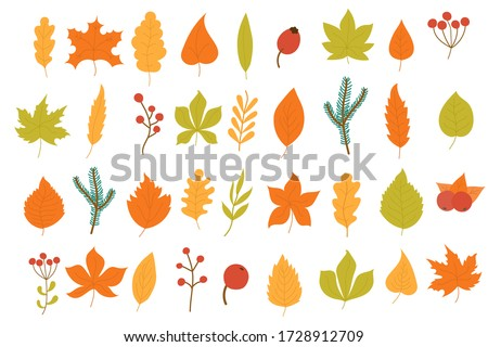 Set of colorful autumn leaves and berries isolated on white background. Yellow autumnal garden leaf, red fall leaf and fallen dry leaves. Simple cartoon flat style, vector illustration, eps 10. #1728912709