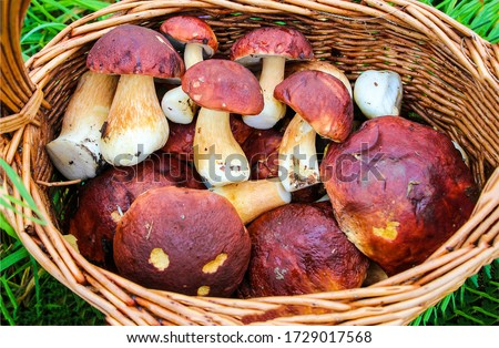 Porcini mushroom basket top view. Porcini mushrooms close up #1729017568
