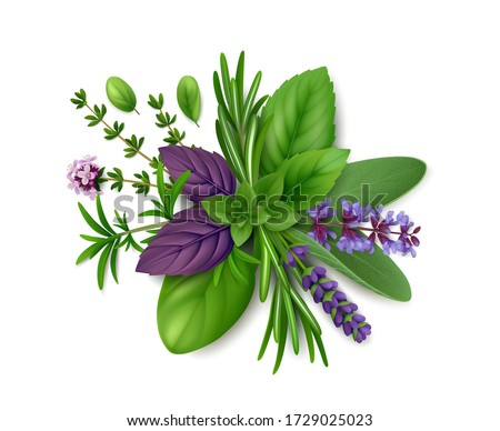 Bunch of fresh herbs de Provence: rosemary, summer savory, oregano, thyme, sage, lavender, mint, marjoram and basil (green and purple). Isolated on white background. Top view. Realistic illustration #1729025023